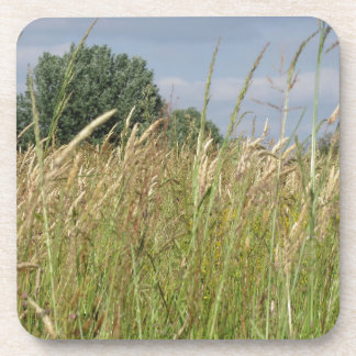 Summer landscape of wild field in the countryside coaster