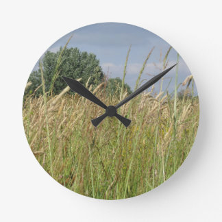 Summer landscape of wild field in the countryside round clock