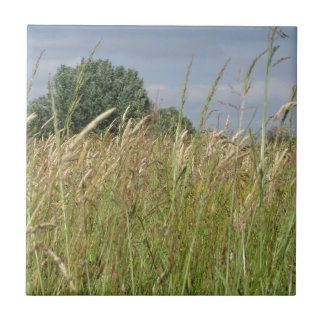 Summer landscape of wild field in the countryside tile