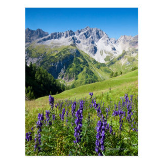 Summer meadows with monkshood in foreground, the postcard