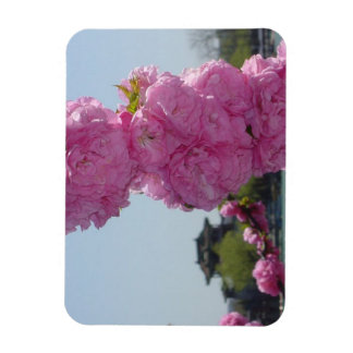 Summer Palace Cherry Blossom Magnet
