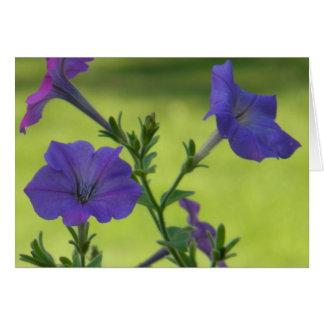 Summer Petunias Card