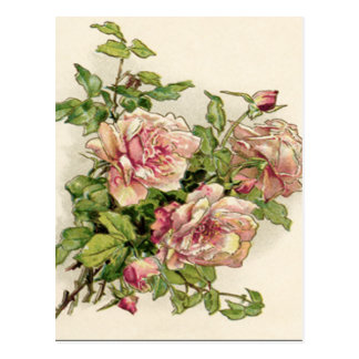Summer Pinkish Rose Postcard