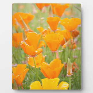 Summer Poppies in Ireland Display Plaques