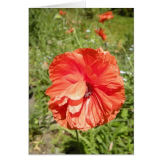 summer poppy haiku card