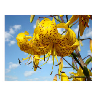 Summer postcards yellow Tiger Lily Flowers Blue