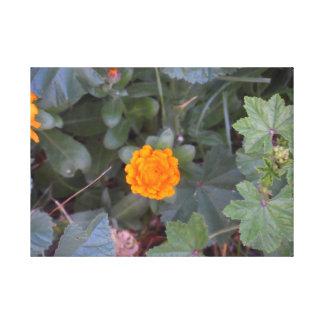 Summer Pride, Orange Wildflower Wall Art