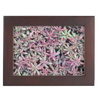 Summer Succulent Natural Pattern Keepsake Box