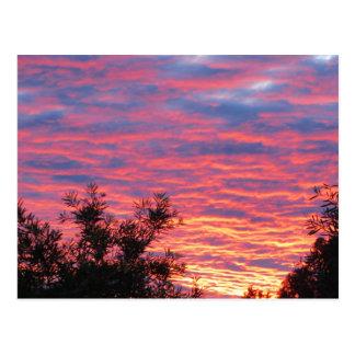 Summer Sunset Postcard