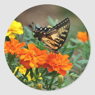 Summer - Swallowtail Butterfly and Pretty Marigold Classic Round Sticker
