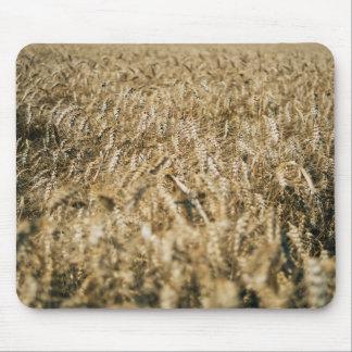 Summer Wheat Field Closeup Farm Photo Mouse Pad