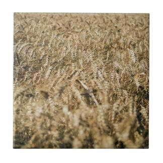 Summer Wheat Field Closeup Farm Photo Small Square Tile