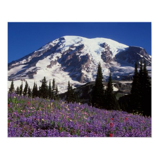 summer wildflowers at the base of Mount Rainier, 2 Print