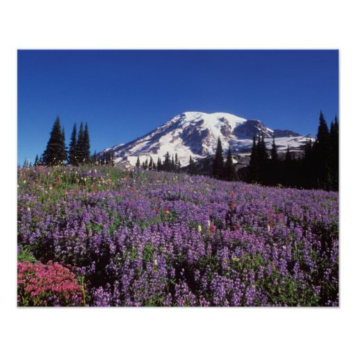 summer wildflowers at the base of Mount Rainier, Poster