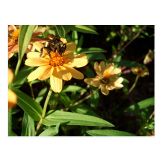 Summer's Day Bee on Sunny Yellow Flowers Postcard