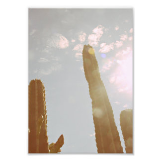Sun and Cactus Photographic Print