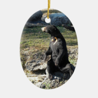 Sun Bear at the Zoo Ceramic Ornament