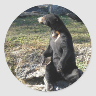Sun Bear at the Zoo Classic Round Sticker