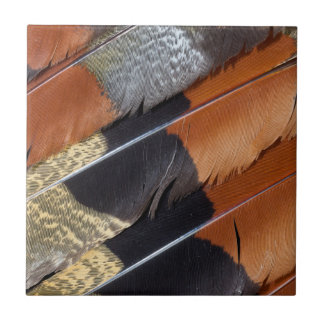 Sun Bittern feather detail Tile