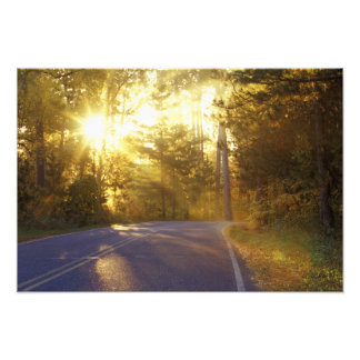Sun bursts through the forest onto roadway at art photo