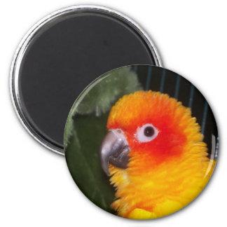 sun conure 6 cm round magnet