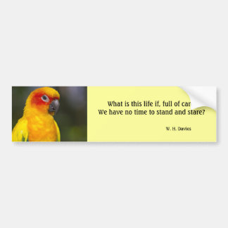 Sun Conure Parrot Bumper Sticker (with text)