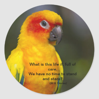 Sun Conure Parrot Sticker (with text)