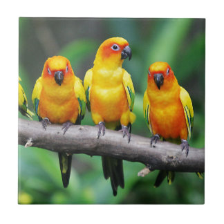 Sun Conures Small Square Tile