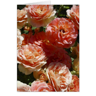 Sun dappled roses card