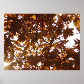 Sun Diamond on Fall Leaves Poster