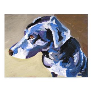 sun dog profile Postcards