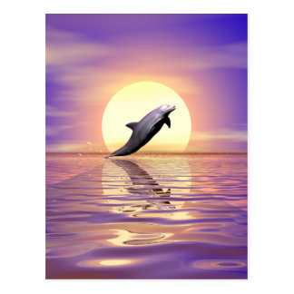 Sun Dolphin Postcard