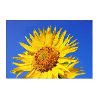 Sun-flower Acrylic Print