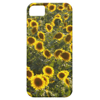 _sun flower field barely there iPhone 5 case