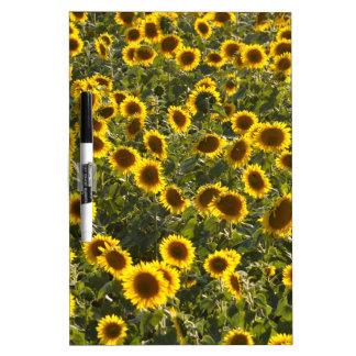 _sun flower field dry erase board