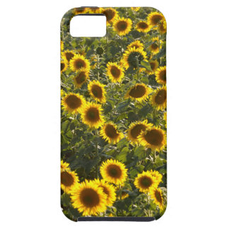 _sun flower field iPhone 5 cover