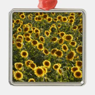_sun flower field metal ornament