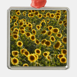 _sun flower field Silver-Colored square decoration