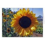 SUN flower Greeting Cards