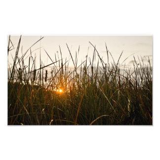 Sun grass photo print