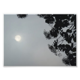 Sun in the Morning Fog with Tree Silhouette Photo Art