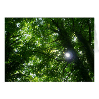 Sun in the Trees Greeting Cards