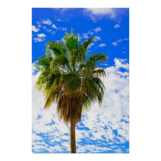 Sun-kissed palm tree paradise posters