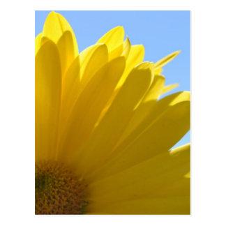 Sun on Petals Postcard