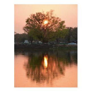 Sun Setting Behind Tree Postcard