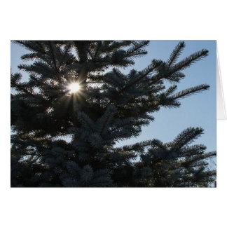 Sun shining through a fir tree greeting card