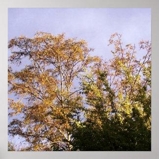 sun shining through birch poster