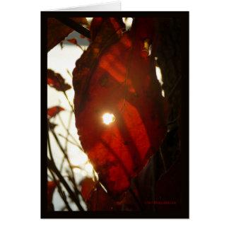 Sun Through Red Leaf Greeting Card