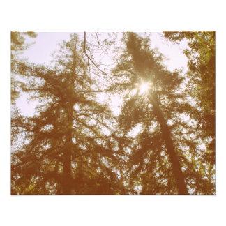 Sun Through Trees Photo