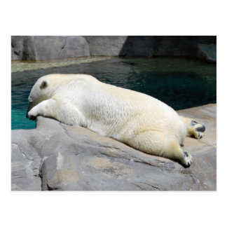 Sunbather Too Postcard